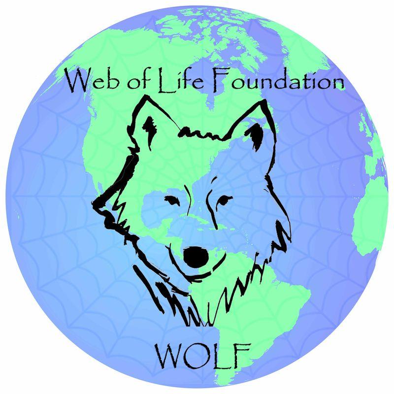Weboflifefoundation